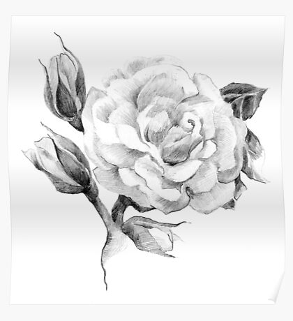 Flower rose sketch  hand drawing Poster