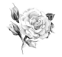 Flower rose sketch  hand drawing Photographic Print