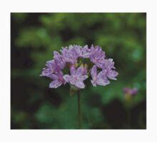 Allium unifolium Baby Tee