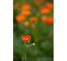 orange flora (1) Photographic Print