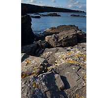 thrift clinging to the rocks Photographic Print