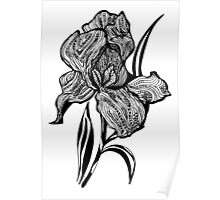 Single flower of Iris graphic illustartion Poster