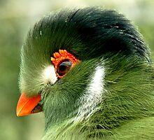 Tropical bird  by Arie Koene