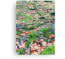 Moss, Roots and Leaves Canvas Print