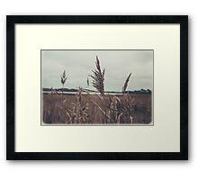old school plants Framed Print