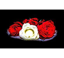Painted Red and White Roses Photographic Print