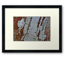 Tree Bark Abstract Framed Print