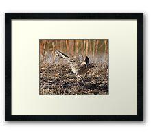 Roadrunner on the Hunt Framed Print