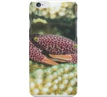 Red-spotted Guard Crab iPhone Case/Skin