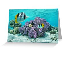 Purple coral underwater with tropical fish Greeting Card