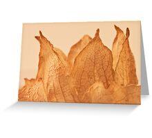 Lavatera Seed Macro  Greeting Card