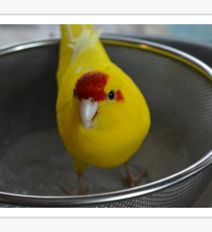 Bird in a Sieve Sticker
