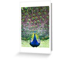 Peacock display Greeting Card