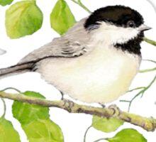 Watercolor Chickadee Bird in Poplar Tree Sticker