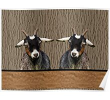 Adorable young goats on textured background in browns Poster