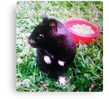 Chomik the Black Bear Hamster Canvas Print