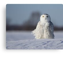 Saint Snowy Canvas Print