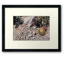 Cactus Blooms (Palm Springs) Framed Print