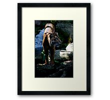 Majestic Tiger from Melbourne Zoo Framed Print