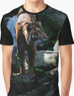 Majestic Tiger from Melbourne Zoo Graphic T-Shirt