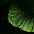 leafy by Mark Malinowski