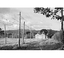 Hops Fields, Tasmania Photographic Print