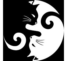 Ying Yang Cats - Black and white Photographic Print