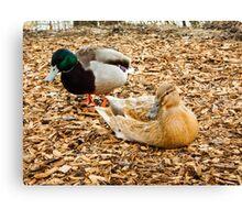 partner ducks Canvas Print