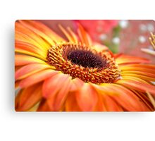 Special flower Canvas Print
