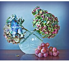 Autumnal still life: grapes and dry hydrangea flowers Photographic Print