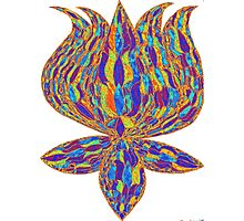 trippie lotus Photographic Print