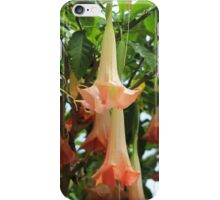 Trumpet Flowers in Pink iPhone Case/Skin