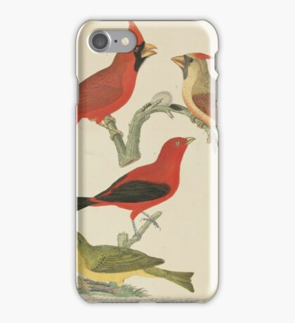 Alexander Wilson - American Ornithology Vol. VII, Plate 581808 - 1814 iPhone Case/Skin