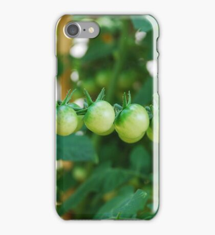 Green Tomatoes on the Vine iPhone Case/Skin