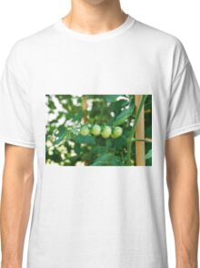 Green Tomatoes on the Vine Classic T-Shirt