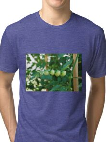 Green Tomatoes on the Vine Tri-blend T-Shirt