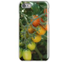 Date Tomatoes Ripening on Vine iPhone Case/Skin