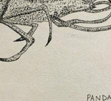 Shrimp illustration Sticker