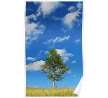Tree with Cumulus Fractus Poster