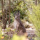 at home, Gladstone, South Australia by Jan Stead JEMproductions