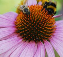 Echinacea Purpurea with Bees  Sticker