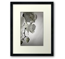 Orchid in White Framed Print