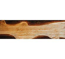 Hard wood river Photographic Print