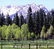 California Spring by clizzio