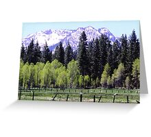 California Spring Greeting Card