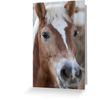horse in the farm Greeting Card