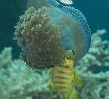 Jellyfish with Golden Trevally by Mark Rosenstein