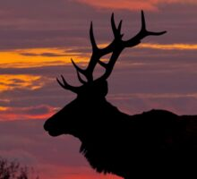 Bull Tule Elk Silhouetted at Sunset Sticker