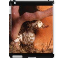 """Sydney Dwarf Pipehorse """"pregnant"""" male iPad Case/Skin"""