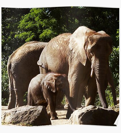 Pittsburgh Zoo - elephants on parade (2009) Poster